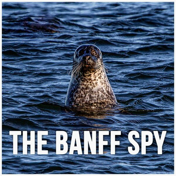 The Banff Spy Podcast Podcast Artwork Image