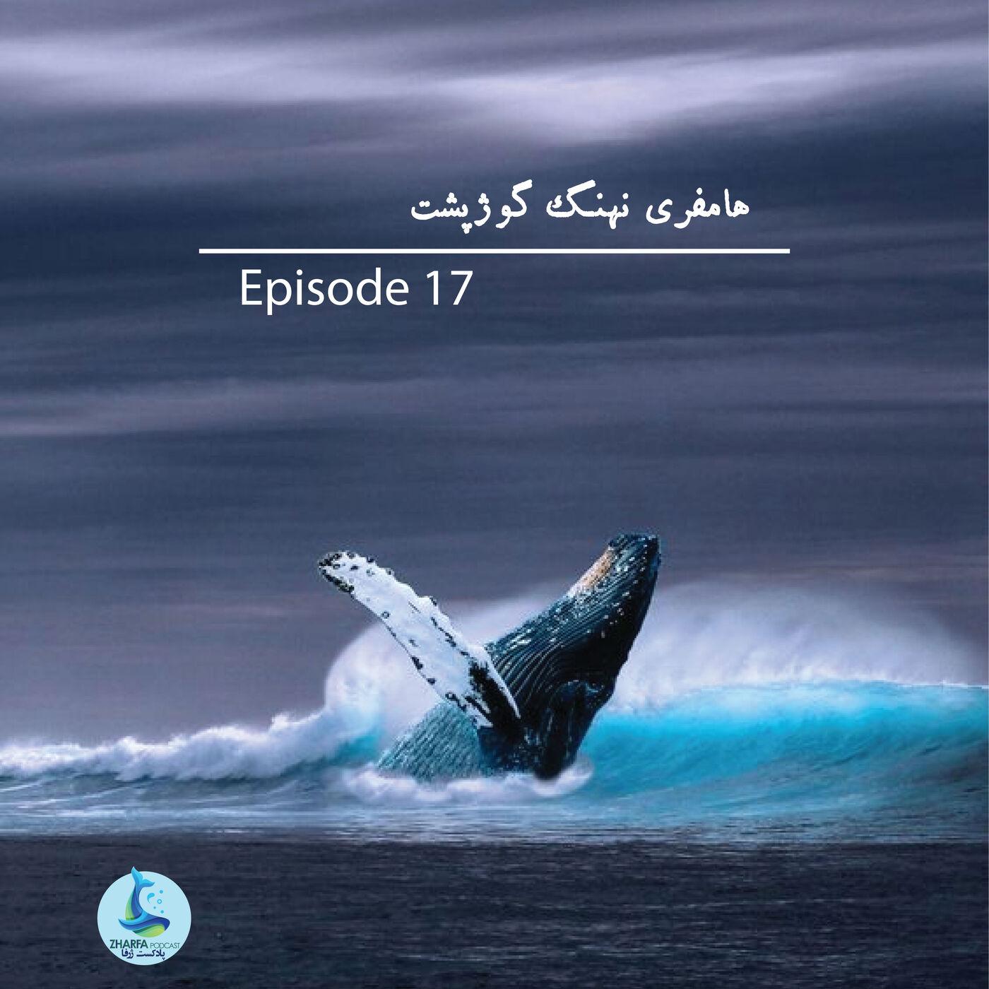 شماره هفدهم - هامفری نهنگ گوژپشت