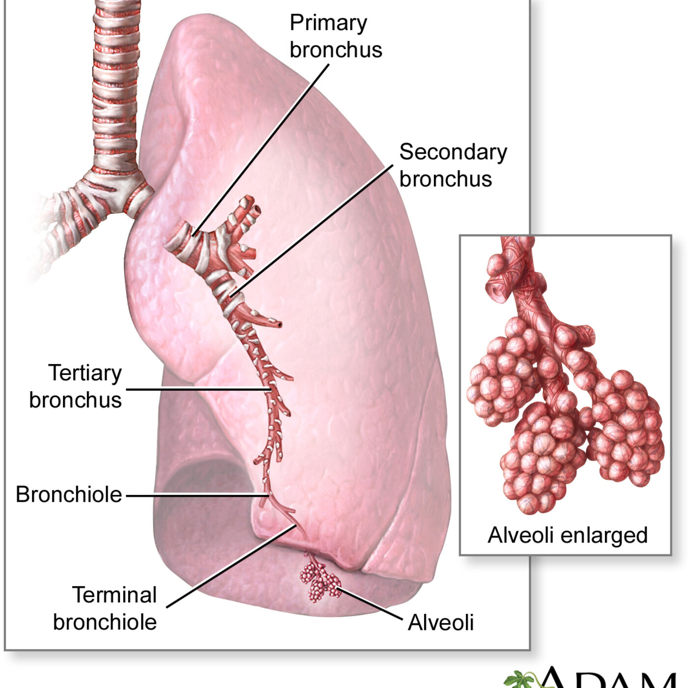 Ventilation, Oxygenation, and Perfusion