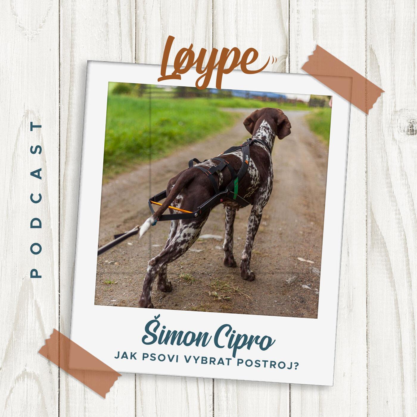 07 | Jak psovi vybrat postroj? | Šimon Cipro